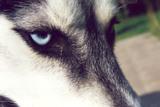 Orion_eyes_2